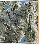 White Flowering Crabapple Tree Wood Print