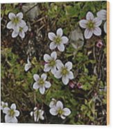 White Flowers And Moss Wood Print