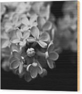 White Flowers In Black And White Wood Print