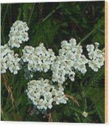 White Flowers In Green Field Wood Print