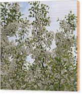 White Flowers On Branches Wood Print