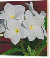 White Frangipani Wood Print