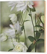 White Frilly Columbines Wood Print