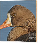 White-fronted Goose Wood Print