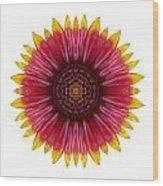Galliardia Arizona Sun I Flower Mandala White Wood Print