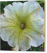 White Garden Petunia Wood Print