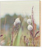 White Garden Snail Wood Print