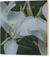 White Ginger Lily Wood Print