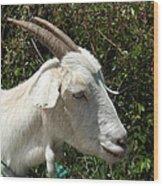 White Goat On A Farm Wood Print