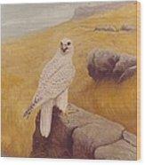 White Gyrfalcon Wood Print