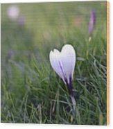 White Heart Wood Print