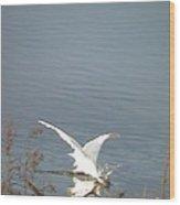 White Heron Feeding In Lake Wood Print