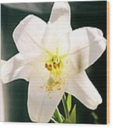 Easter Lily Up Close, Bermuda Wood Print