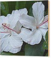 White Hibiscus Trio Waikiki Wood Print