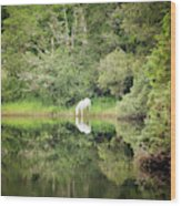 White Horse Drinking Water Wood Print