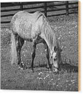 White Horse In A Pasture Among Daisy Flowers Wood Print