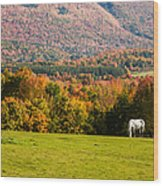 White Horses Grazing With View Of Green Mtns Wood Print