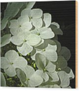 White Hydrangeas Wood Print
