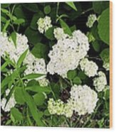 White Hydrangia Beauty Wood Print