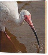 White Ibis Wood Print