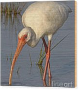 White Ibis In Grass Wood Print
