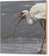 White Ibis On The Beach Wood Print