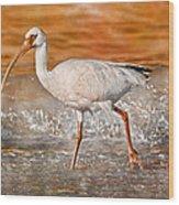 White Ibis Stroll Wood Print
