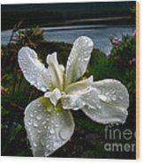 White Iris Wood Print