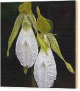 White Lady's Slipper Pair Wood Print