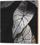 White Leaves Wood Print