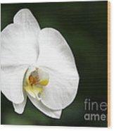 White Light Wood Print
