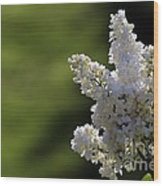 White Lilac Wood Print