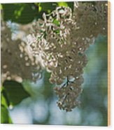 White Lilacs In The Shade - Featured 2 Wood Print