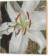 White Lily Wood Print