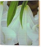 White Lily Bows  Wood Print