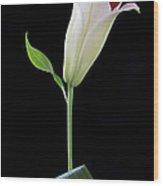 White Lily Bud Wood Print