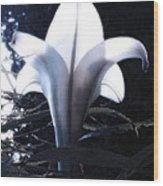 White Lily By Jan Marvin Wood Print