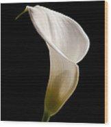 White Lily Wood Print by Amanda Elwell
