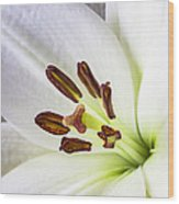 White Lily Close Up Wood Print by Garry Gay