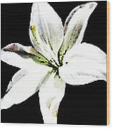 White Lily - Elegant Black And White Floral Art By Sharon Cummings Wood Print by Sharon Cummings