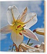 White Lily Flower Against Blue Sky Art Prints Wood Print