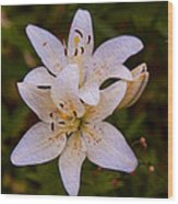 White Lily Starburst Wood Print