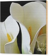 White Lily Trio Wood Print