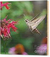 White-lined Sphinx Humming Bird Moth Wood Print