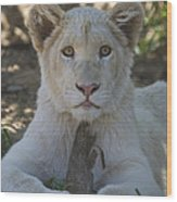 White Lion Cub  Wood Print