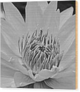 White Lotus 2 Bw Wood Print