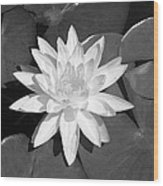 White Lotus 2 Wood Print
