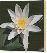 My White Lotus Wood Print