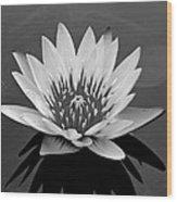 White Lotus Flower Wood Print