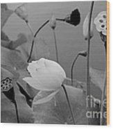 White Lotus Flowers In Balboa Park San Diego Wood Print